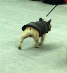 koirienmuotinaytos1