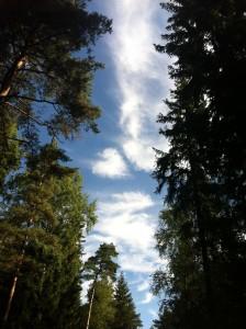 Metsä ja taivas