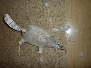 Ikean hiiri.
